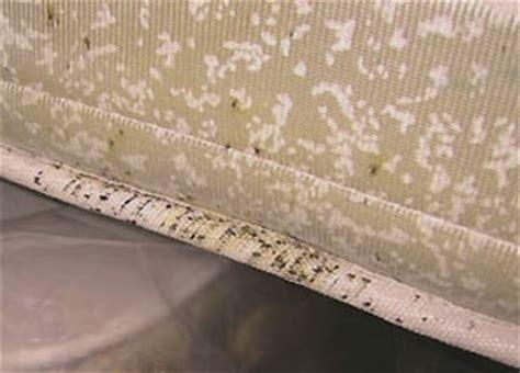 Bed Bugs Hotels Infestation De Punaises De Lit Quelques Conseils D