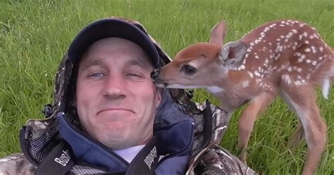 saves baby baby deer refuses to leave the human who saved bored panda