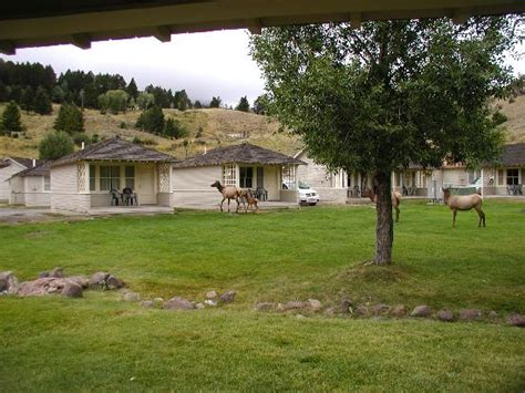 Mammoth Springs Hotel And Cabins Yellowstone National Park Wy by Mammoth Cabins Picture Of Mammoth Springs Hotel