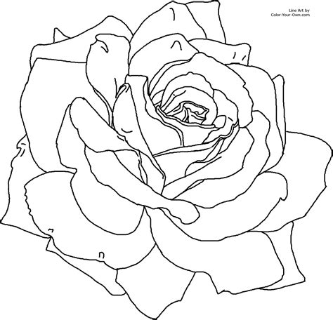 coloring pages flower rose rose flower coloring page
