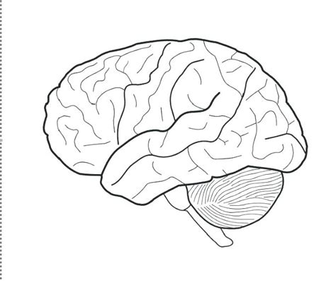 brain coloring page brain worksheet coloring pages