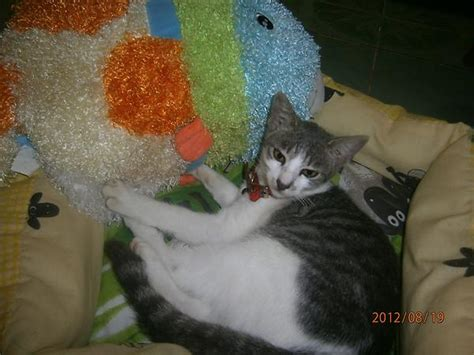 Sho Kucing baju kucing shop bajukucingshop
