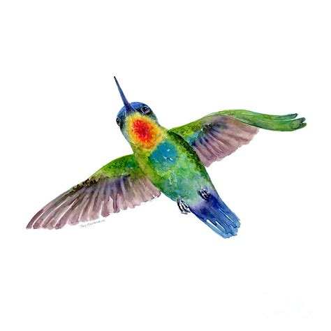 fiery throated hummingbird painting by amy kirkpatrick