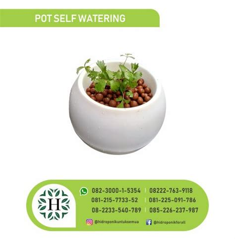 Jual Pupuk Hidroponik Bengkulu pot self watering jual alat bahan media hidroponik