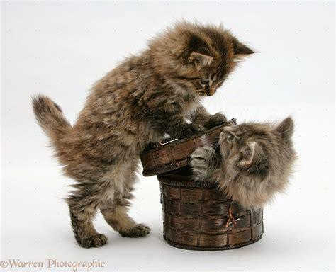 Boneka Kucing Imut Lucu Terbaru foto lucu bergerak terimakasih terlengkap display