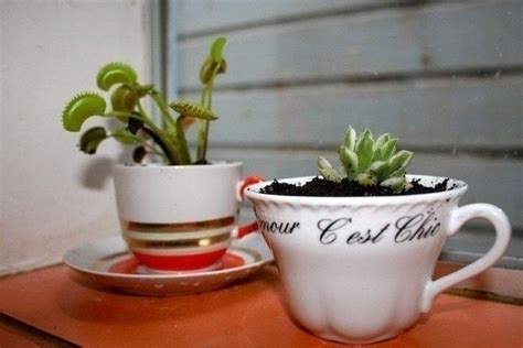 garden tea party tea cup planter 183 how to make a tea cup