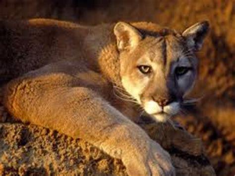 imagenes de animales de zacatecas blog de jessy fauna de zacatecas