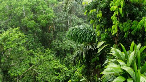 amazon jungle tropical rainforest amazon rainforest ability to soak up carbon dioxide is
