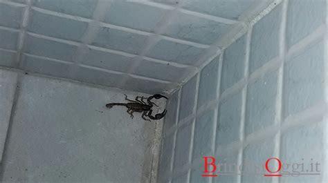 comune di brindisi ufficio anagrafe troppi scorpioni l ufficio anagrafe oggi chiuso per la