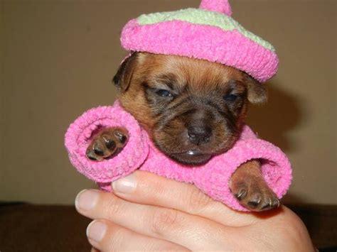 puppy dress up puppy dress up photo album 187 topix