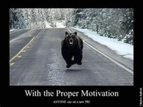 Running Bear Meme - 1000 images about running bear on pinterest bears