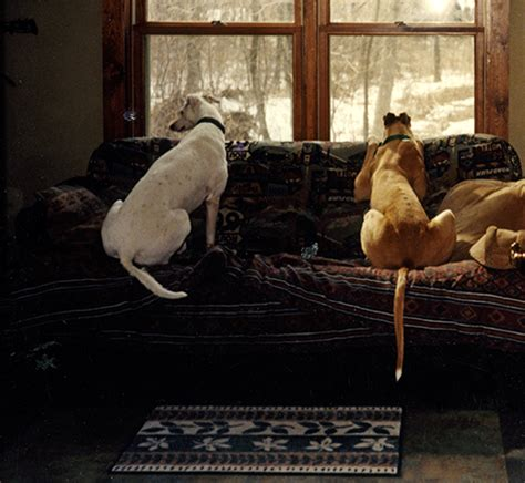 dog misses couch animals inspiring technology