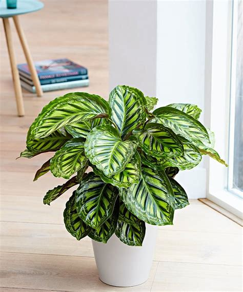 beautiful house plants 29 most beautiful houseplants you never knew about