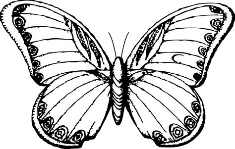 black and white coloring pages of butterflies butterfly line drawing clipart best