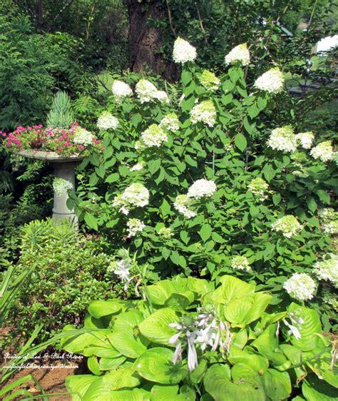 shade loving our fairfield home garden