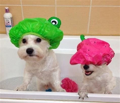 how to make bath time fun for dogs dog training nation dog bath time funnies cute funny dog pics