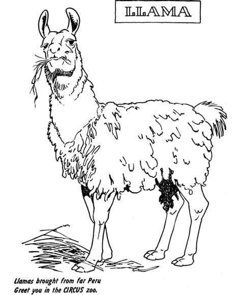Galerry free coloring pages llamas