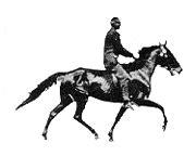 membuat gambar gif dari video rahmian4 gambar gif dari jenis hewan kuda kuda lucu