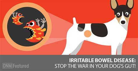 irritable bowel in dogs irritable bowel disease in dogs