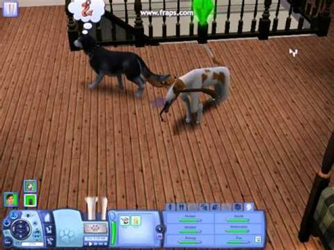 sims 3 pets pug the sims 3 pets glitch dogs