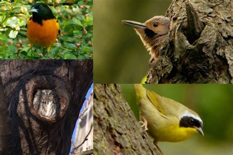 film about central park and its birders explores
