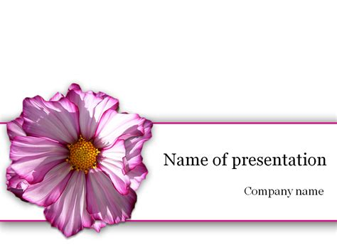 Download Free Purple Flower Powerpoint Template For Presentation Flower Powerpoint Template