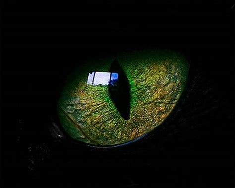imagenes ojos de animales 40 macrofotograf 237 as de ojos animales marcianos