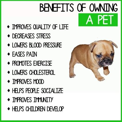 benefits of dogs the healing power of the pethelpful