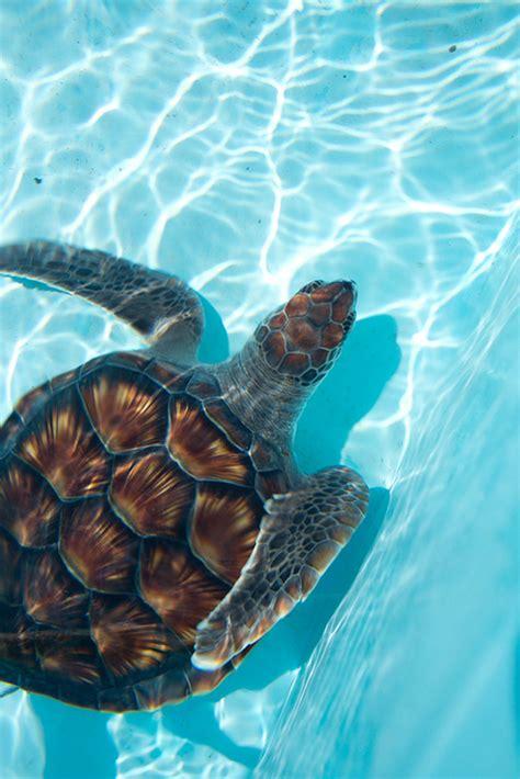 Tiny Plains surfing turtle tumblr