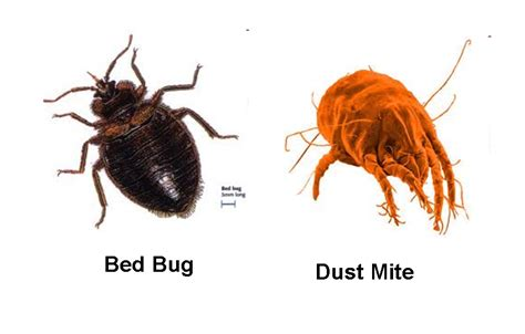 bed bug vs mosquito deluxe carpet cleaning allergyshield dust mites