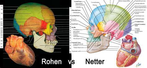 frank netter anatomy coloring book frank netter med student books