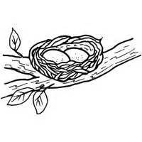 eggs in nest coloring page eggs in nest 187 coloring pages 187 surfnetkids