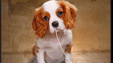 doge puppy 강아지 눈의 hd 바탕 화면 배경 화면 와이드 스크린 높은 정의