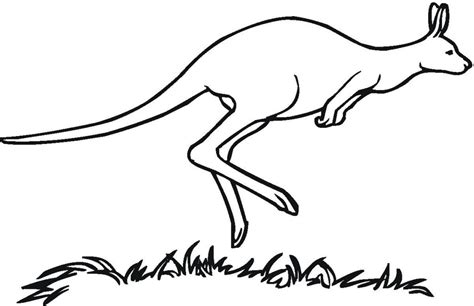 coloring pages of a kangaroo free printable kangaroo coloring pages for kids