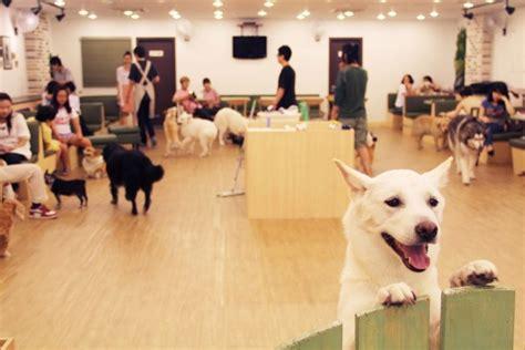 dog house singapore seul da karşınıza 199 ıkabilecek en ilgin 231 kafeler oitheblog