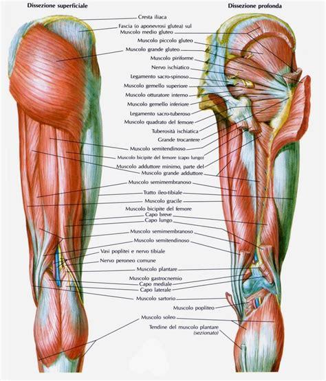 contrattura interno coscia muscolo bicipite femorale medicinapertutti it