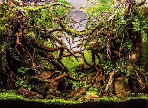 Aquascaping Competition Planted Tank Comp Winner The Tech Den Qld Aquarium Forum