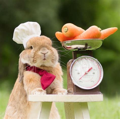 conejo de fuego 2016 201 l es el conejo m 225 s tierno y estiloso de instagram fmdos