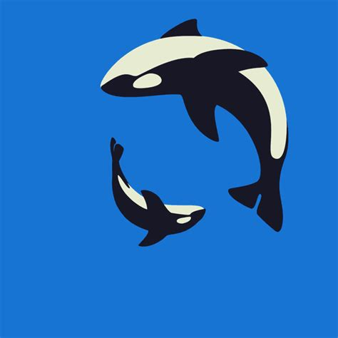 wale gif great animated orca and killer whale gifs at best animations