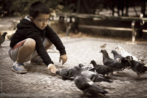 feeding the birds by nico eos1 on deviantart