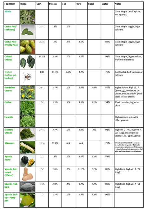 7 Things Not To Feed Your Bearded by Food Chart With Pictures Bearded Forum