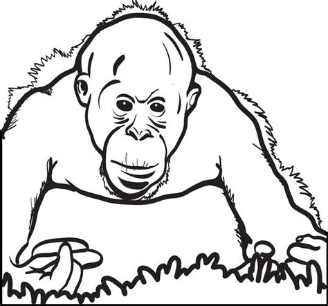 orangutan coloring pages