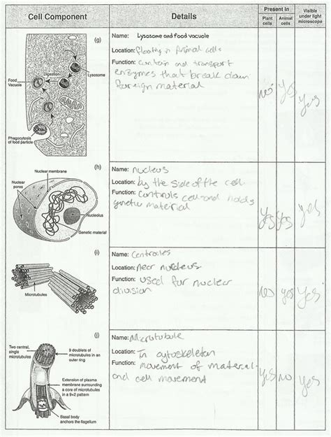 Ap Bio Cell Structure And Function Worksheet