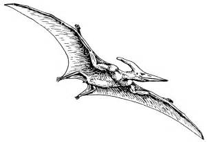 Pterodactyl dinosaur images amp pictures becuo