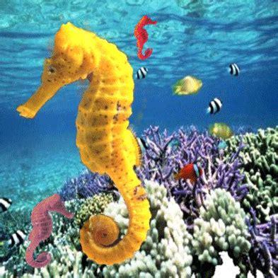 imagenes animales acuaticos animales seg 218 n su h 193 bitat
