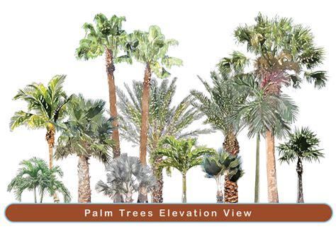 Home Design Software Plan 3d palms super landscaping plan software