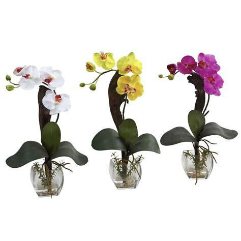 nearly mini phalaenopsis orchid arrangement set