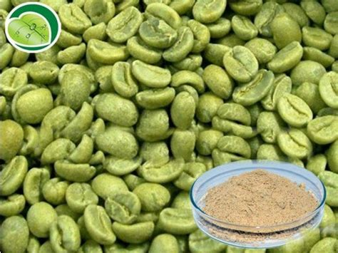 Green Coffee Adalah khasiat green coffee 1000 secrivalsstore
