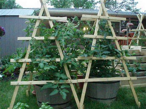 tomato garden ideas beautiful tomato garden 8 tomato garden trellis ideas smalltowndjs how to