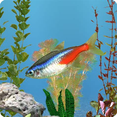 anipet freshwater aquarium live wallpaper apk anipet freshwater aquarium live wallpaper free